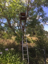 owl_box_in_tree